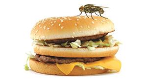 آیا حشرات باعث آلودگی غذاها می شوند؟