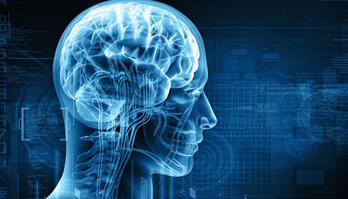تغيير شکل مغز چگونه امکان پذير است؟
