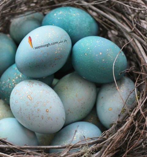 تزیین تخم مرغ هفت سین با آب رنگ و گواش - مدل شماره 2