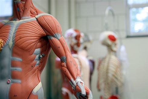 عضو جديد کشف شده در بدن چيست؟