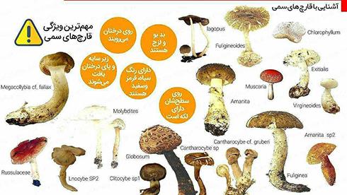 صحبت با چند نفر از مسمومین به قارچ های سمی