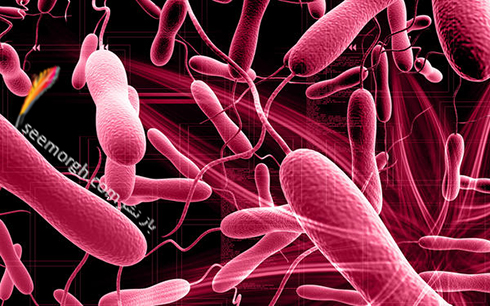 وبا,میکروب,عکس میکروب