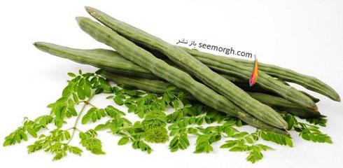 مورنیگا ، گیاهی که سرطان و دیابت را از بین می برد + خواص مورنیگا