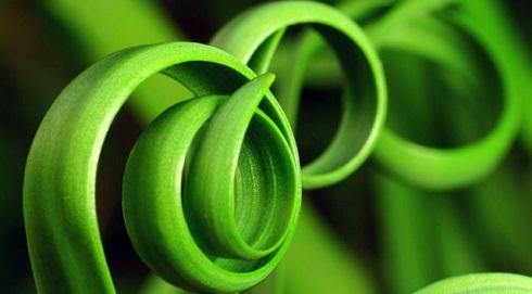 سبز,روانشناسی رنگ ها: 4 رنگ اصلی چه تاثیری بر شما می گذارند؟