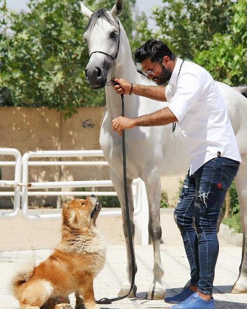 نیکبخت در کنار سگ و اسبش