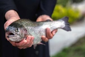 زن ایرانی که در منزلش پرورش ماهی قزل آلا راه انداخته است!! + عکس