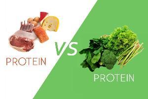 پروتئین گیاهی بهتر است یا پروتئین حیوانی