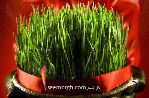 سبزه عید را اینگونه درست کنید