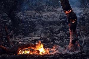 عکس دردناک از زنده سوختن جانداران در جنگل های اندیمشک
