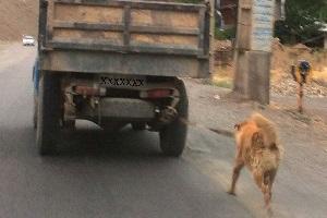 تنبیه دردناک یه سگ در جاده چالوس