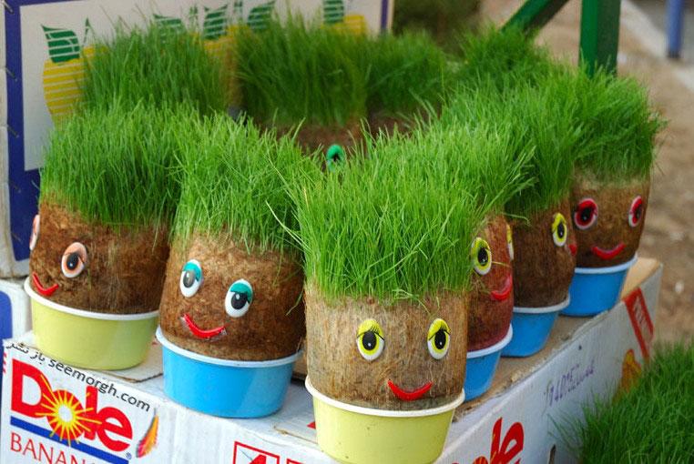 سبزه جو چرا سبزه را در سفره هفت سين قرار مي دهند؟