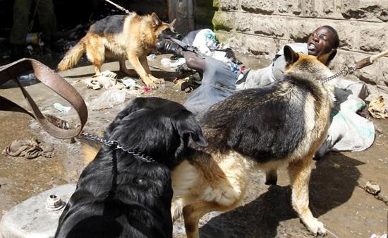 تصاویری دردناک از حمله حیوانات وحشی به انسان