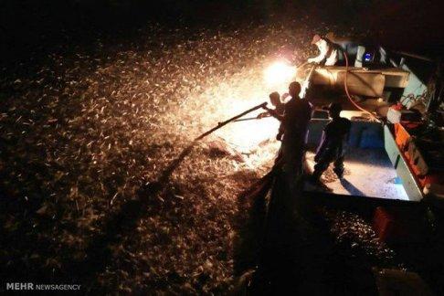 شکار ماهی با آتش 2
