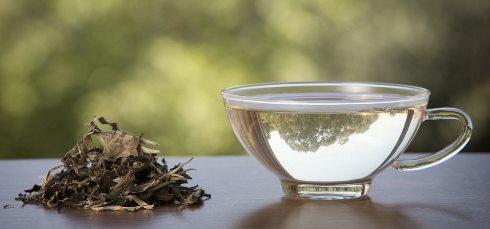 چای سفید از تشکیل سلول های چربی جدید جلوگیری می کند و مانع اثرات مخرب نور آفتاب می شود!
