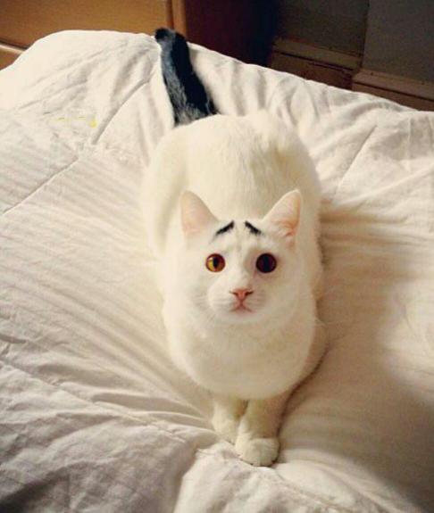 عکسی از چهره بامزه گربه نگران