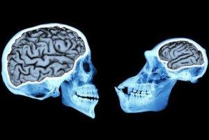 تفاوت مغز انسان های اولیه با ما چه بوده است؟