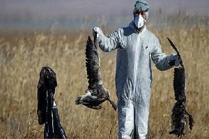 مشاهده 3 لاشه پرنده مبتلا به آنفلوانزای پرندگان در اطراف دریاچه چیتگر