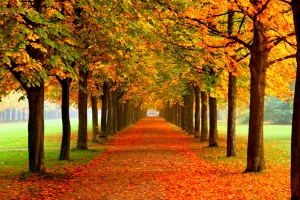 Image result for فصل پاییز