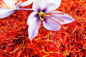 مهار سلول های سرطانی با قرص زعفران