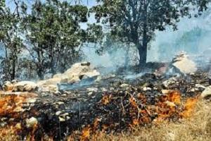 علت فوت چهار تن در جنگلهای مریوان