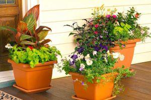 نگهداری گل های آپارتمانی با چند نکته ساده