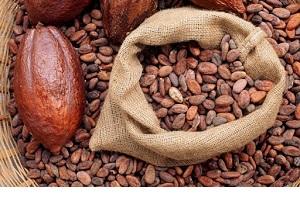 کاکائو و خاصیت آن برای سلامت مغز بزرگسالان