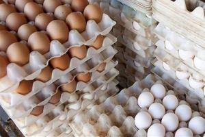 نرخ واقعی هر کیلو تخم مرغ بالای ۱۵ هزار تومان است