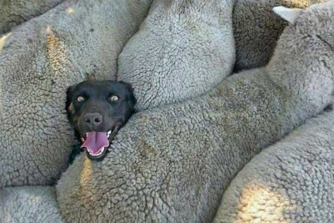 عکس دیدنی از چهره سگ