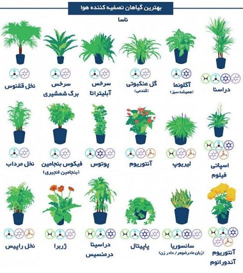 گل هایی که هوا را تصفیه می کنند
