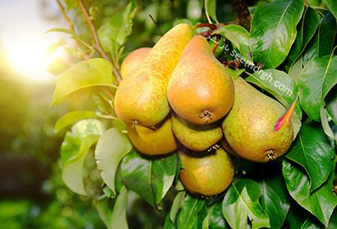 این میوه ها قند زیادی دارند، احتیاط کنید + میوه هایی با قند کم
