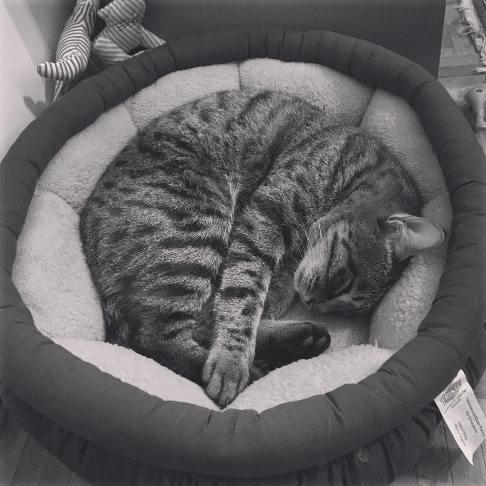 سوژه شدن هانیه توسلی بخاطر جملات عجیب پس از مرگ گربه اش!