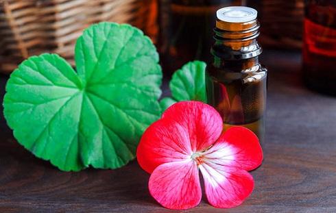 سردردتان هورمونی است؟ از روغن شمعدانی برای درمان سردرد استفاده کنید