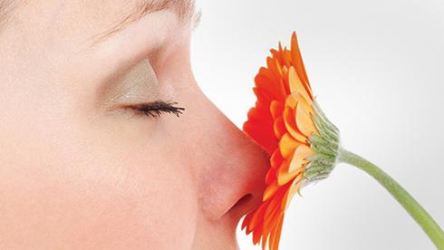 علت آنوسمی یا از دست دادن حس بویایی یا کر بویی چیست؟