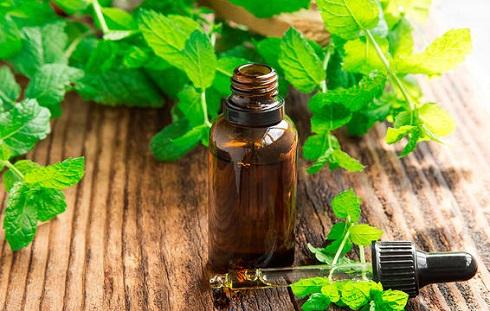 سردردتان تنشی است؟ برای درمان سردرد تان از نعنا استفاده کنید