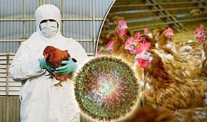 آنفولانزاي مرغي بيخ گوش ايرانيها
