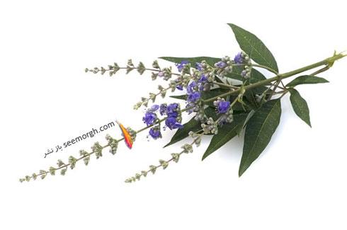 گیاهانی که کاهش دهنده میل جنسی زنان هستند