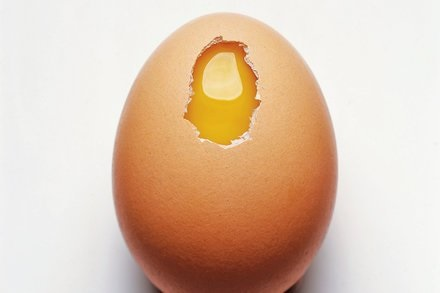 خوردن 12 تخم مرغ در هفته خطرناک است؟