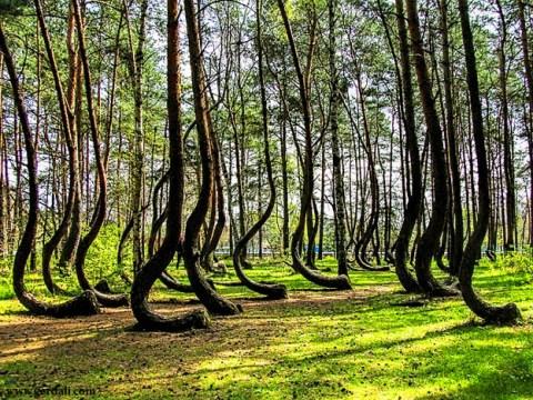 درختانی که به شکل کج رشد کرده اند