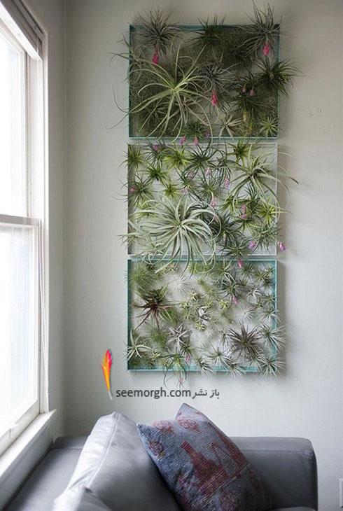 گیاهان آپارتمانی,گل های آپارتمانی,چیدمان خانه با گیاهان,پرورش گیاهان آپارتمانی,گیاهان زینتی