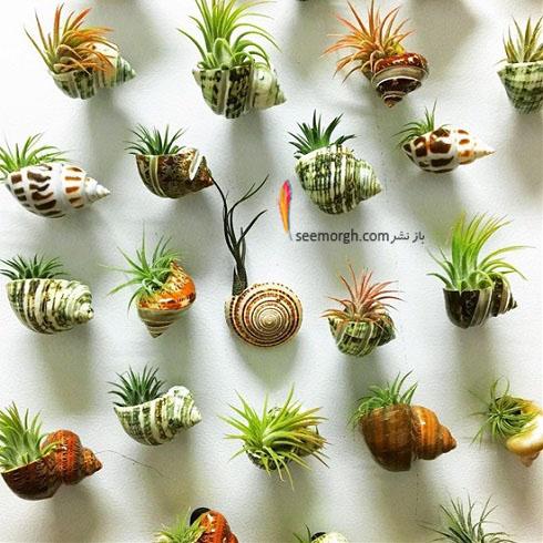 گیاهان آپارتمانی,گل های آپارتمانی,چیدمان خانه با گیاهان,پرورش گیاهان آپارتمانی,گلدان های خاص