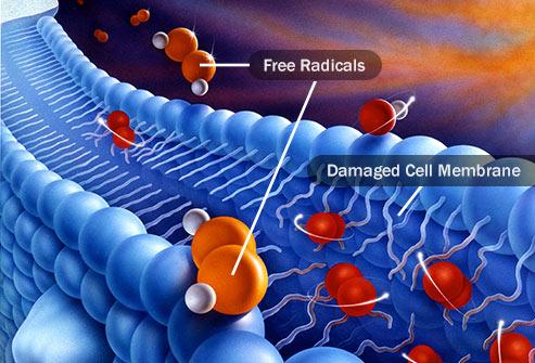 آنتی اکسیدان,رادیکال آزاد
