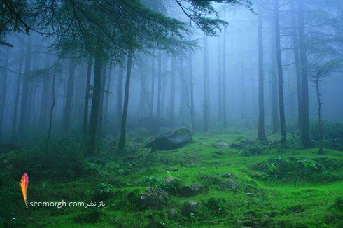 جنگلNear Kargil، Himachal Pradesh