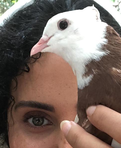 الناز شاکردوست به همراه یک کبوتر