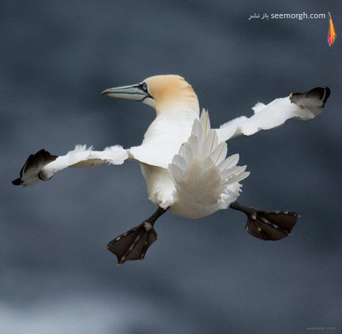 charlie davidson,اردک,عکاسی,حیات وحش,کمدی
