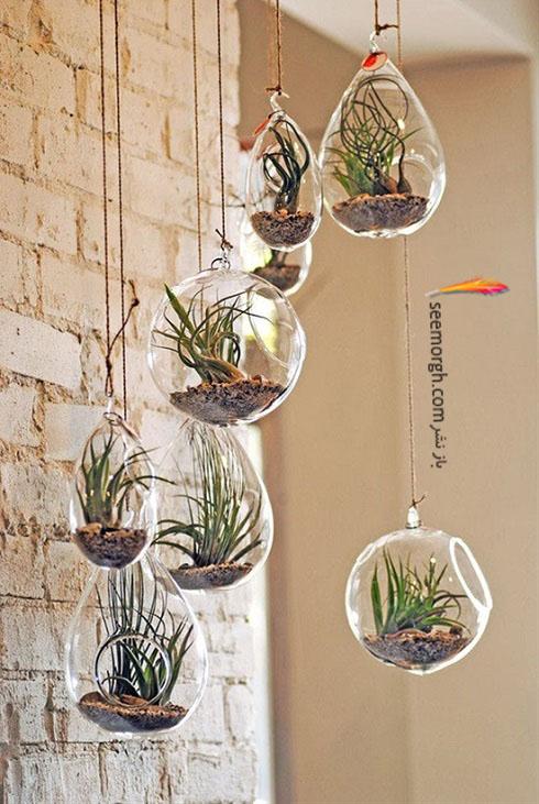 گیاهان آپارتمانی,گل های آپارتمانی,چیدمان خانه با گیاهان,پرورش گیاهان آپارتمانی,تراریوم شیشه ایی,دکوراسیون داخلی