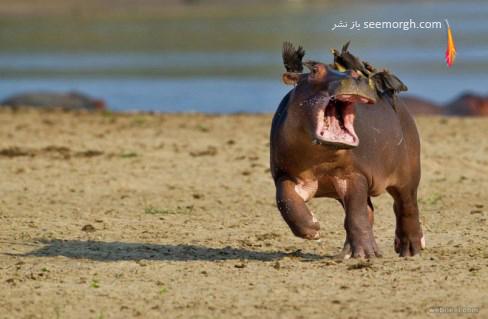 marc mol,اسب آبی,عکاسی,حیات وحش