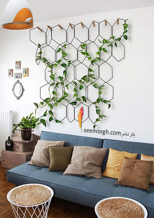 گیاهان آپارتمانی,گل های آپارتمانی,چیدمان خانه با گیاهان,پرورش گیاهان آپارتمانی,گیاهان بالارونده