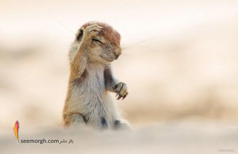 سنجاب خنده رو,عکاسی کمدی, حیات وحش yuzuru masuda