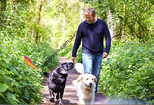 سگ,پیاده روی با سگ ها