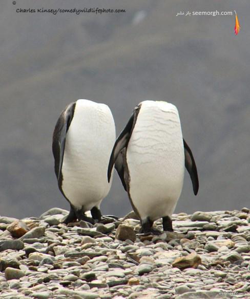 charles Kinsey,عکاسی,حیات وحش,پنگوئن